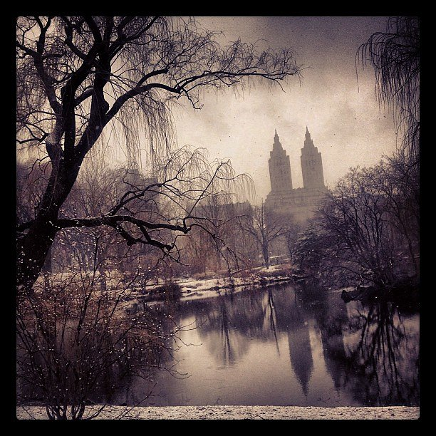 Snowy Central Park #central park #snow #nyc